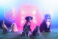 ペットフード会社が、MLSで目指すペットに優しいスタジアム